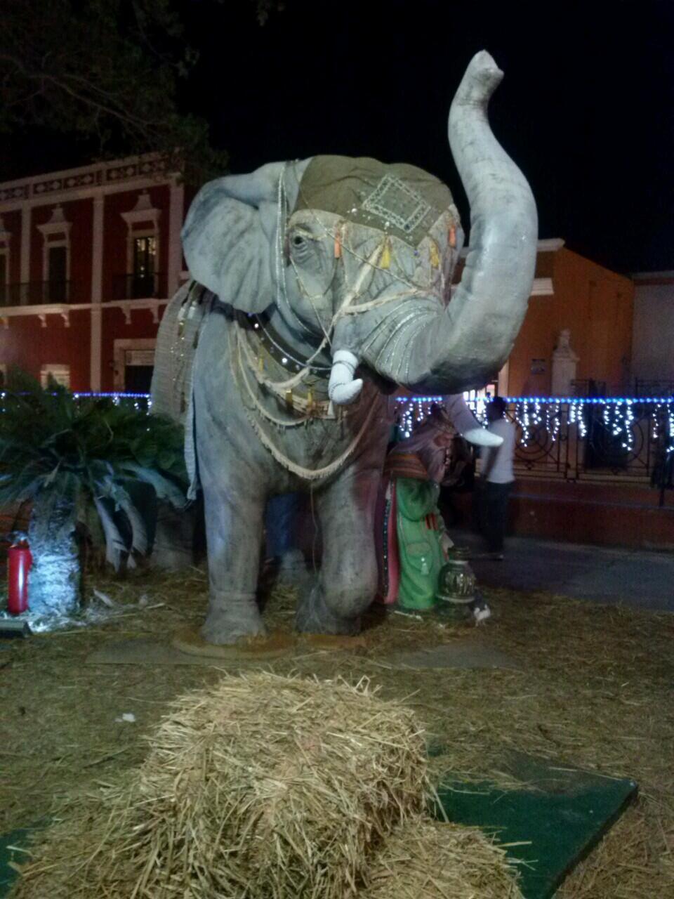 EL ELEFANTE Navideño del Parque Principal en San Francisco de Campeche!!! http://t.co/7iMCAqnzoZ