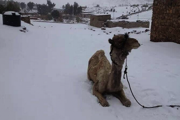 Rick Reichmuth (@rickreichmuth): By far, the most fascinating pic today! More stunning photos of Middle East snow storm: http://t.co/EPYX9U23xR http://t.co/8ddWnc08VB""