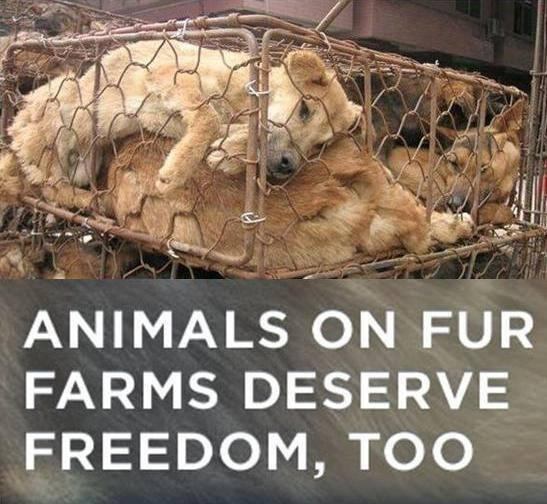 Help STOP the fur trade & make the world a more compassionate place for animals: http://t.co/W8rtGp1hrj http://t.co/CtziZ6m1Ex