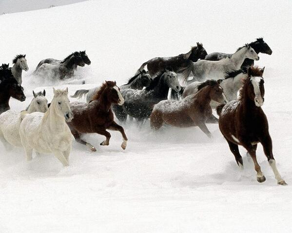 금년 갑오년(甲午年)말(馬)띠 해에, 모든 팔로워님들 께서는 힘차게 역동적(力動的)으로 앞만보고 달리며 질주(疾走)하는 천리마(千里馬)의 기상(氣象)으로 뜻하는 바를 한 가지씩 이루시길 바랍니다!! http://t.co/Q5i67ms34P