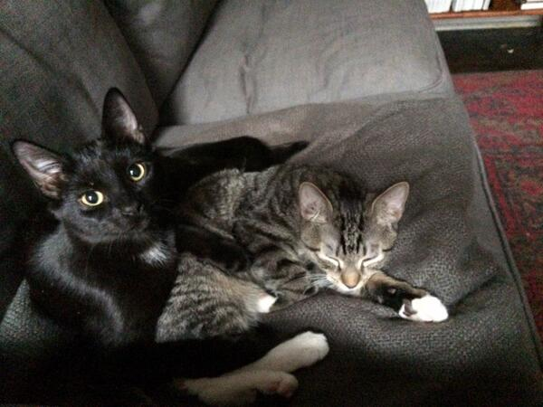 NYC Cats: The story of the subway kittens to start your year righ! ! @kath  #NYC http://t.co/8XwejcYq31 http://t.co/57r3EZyz6P