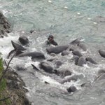 Support Change for Taiji THIS HAS TO STOP Pilot Whale Matriarch fighting for pod http://t.co/Cdz417FplJ #tweet4taiji http://t.co/fGunlytQDi