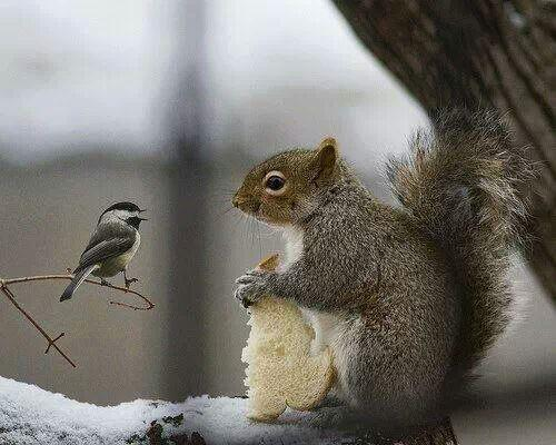 RT @PinkChocoCandy: Can you share one small crumble ? http://t.co/ZSgCG4zlv1