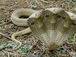 Thanks :3 RT @IceKrystalJ: @miewnassi Snake 3 heads from @Yoonjo__HV http://t.co/IiMuut3cWW