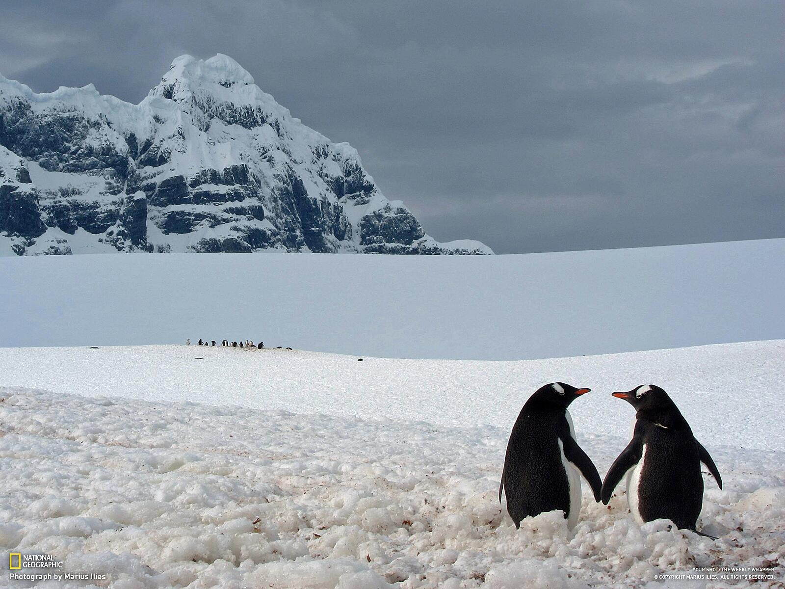 Love Birds http://t.co/FtbSZXNwlS