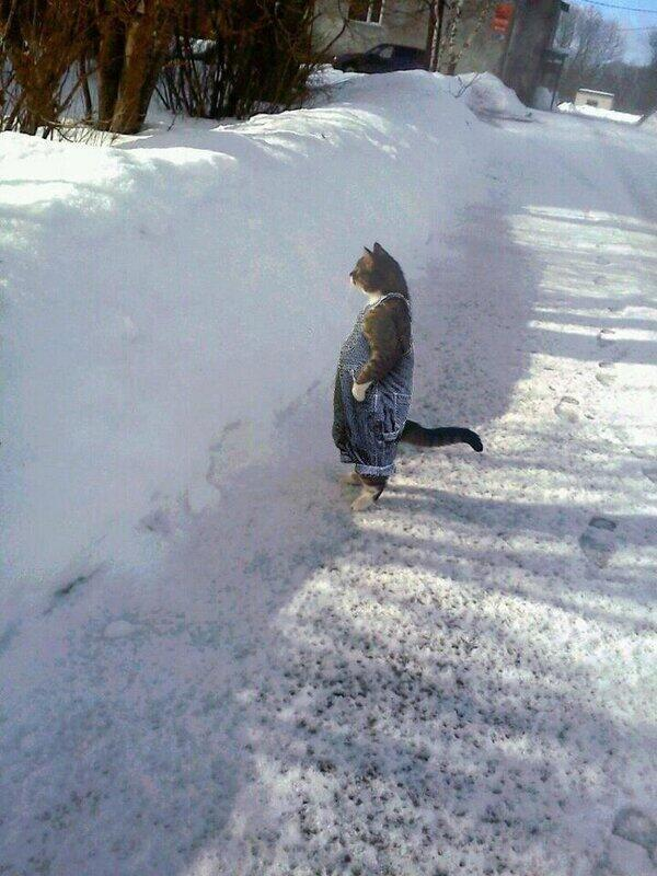 Best Cat Picture Ever! http://t.co/J73RjEdn46
