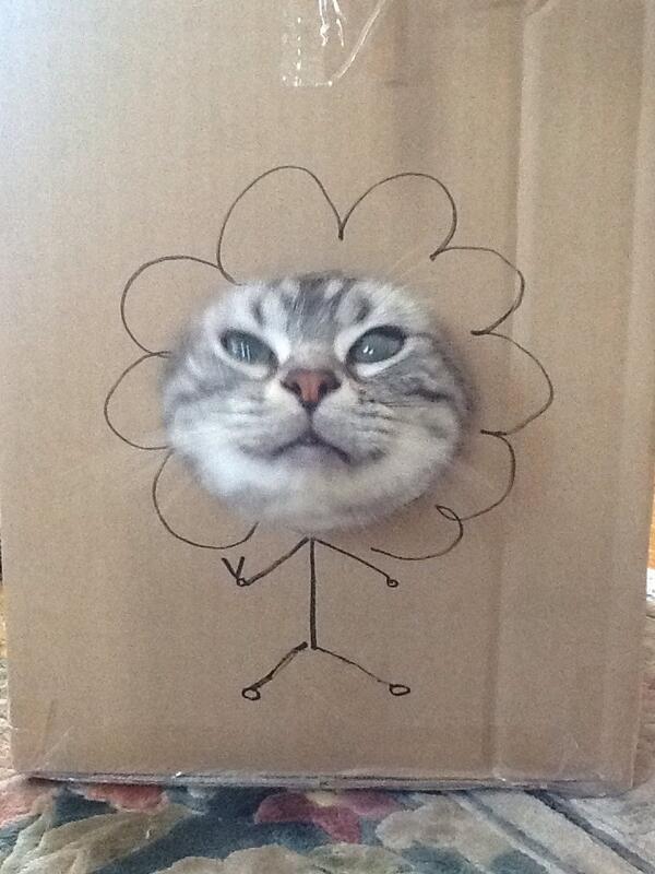 どうみても猫にしかみえん RT @shockcat_bot: ひまわり♪ #neko #cat #猫 #ねこ #ネコ http://t.co/u221Iypfl5
