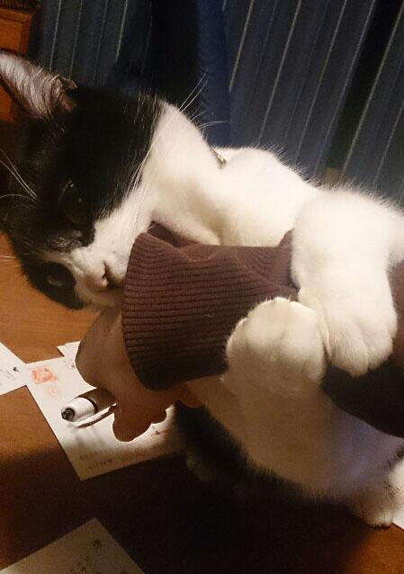 妹から、「年賀状書きのラストスパートを猫が邪魔する」と送られてきた一枚。 http://t.co/SVkQI6coVy