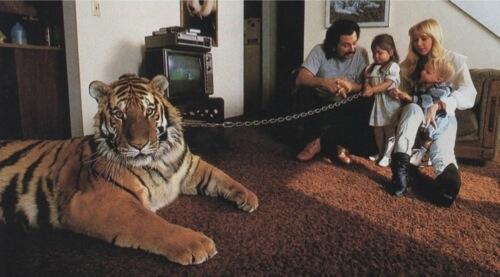 Serbian Tiger as a house pet... http://t.co/aevqRiKzY4