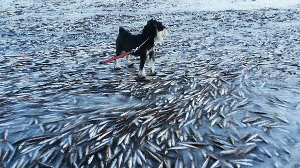 Holy piscocalypse! Norway is so cold, the fish freeze right in the ice! http://t.co/sdOoPMLP00