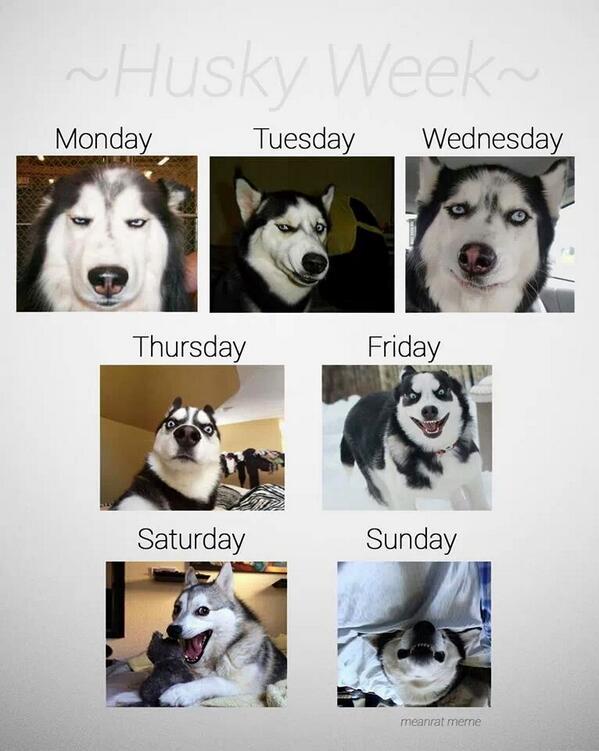 ~Husky Week~ http://t.co/Iui2DSL6nM