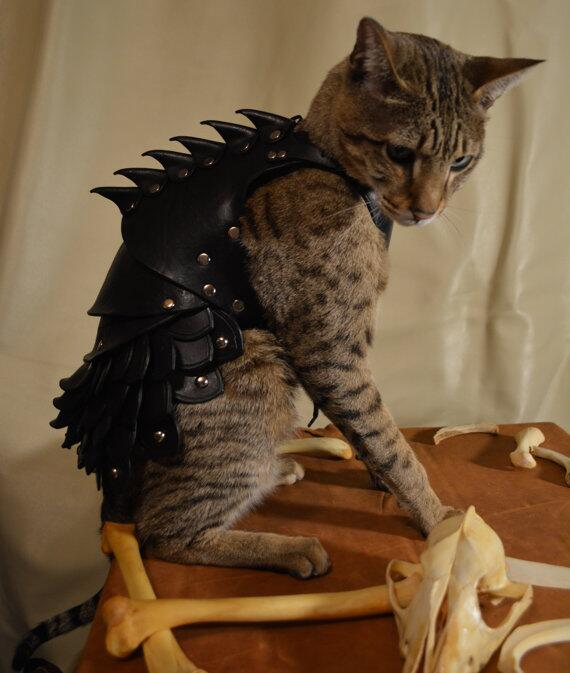 BATTLE CAT! RT @bonniegrrl: Suit your cat in battle armor worthy of @GameOfThrones! http://t.co/AIEDN9I1CR http://t.co/SAelRSiJb3