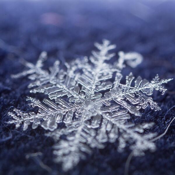 明け方に大変結晶質な雪が降ったようなので、あわよくば朝の小一時間撮影と頑張ったが、8時9時になると気温がどんどん上昇するからなのか、ファインダーの中で見る見るうちに溶けていくので夜以外撮らない事にする… #今日の1枚っきり http://t.co/uvQDlU1dQU