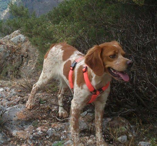 erik ness-hansen (@NessErik): Savnet Hund,Alba har hvert savnet siden Nyttårs aften,forsvant ved Sælveien i Bergen. Hun e 14 månder tispe del http://t.co/x4JExXRZIe