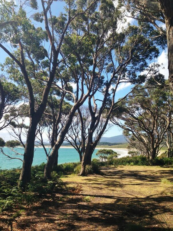 Drive through oysters @BRUNYCHEESE pristine waters & camping sites like this Bruny Island you're more than alright! http://t.co/bL5znmqDed