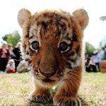 My costar @helloiamluna - WHAT a sweet face. #Cats