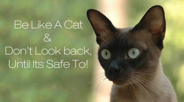 Be Like A Cat & Don't Look Back Until Its Safe To! http://t.co/DAnCKFLkI3