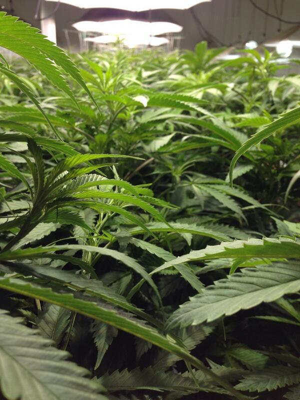 Pot is for sale in Colorado and so far it's big business. Can it last? @AC360 coming up #CNN #AC360 @randikayeCNN http://t.co/emqO9yXIzK