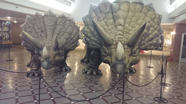 藤丸の恐竜の、ディスプレイ♪ http://t.co/INsg6mTCWU