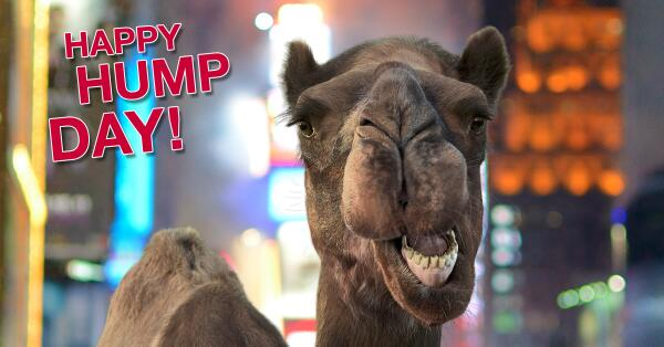 It's the year of the camel, folks. Celebrate #Humpday2014 with Caleb the  camel at http://t.co/S8bNWqbuUw! http://t.co/qHhxEuBf6w