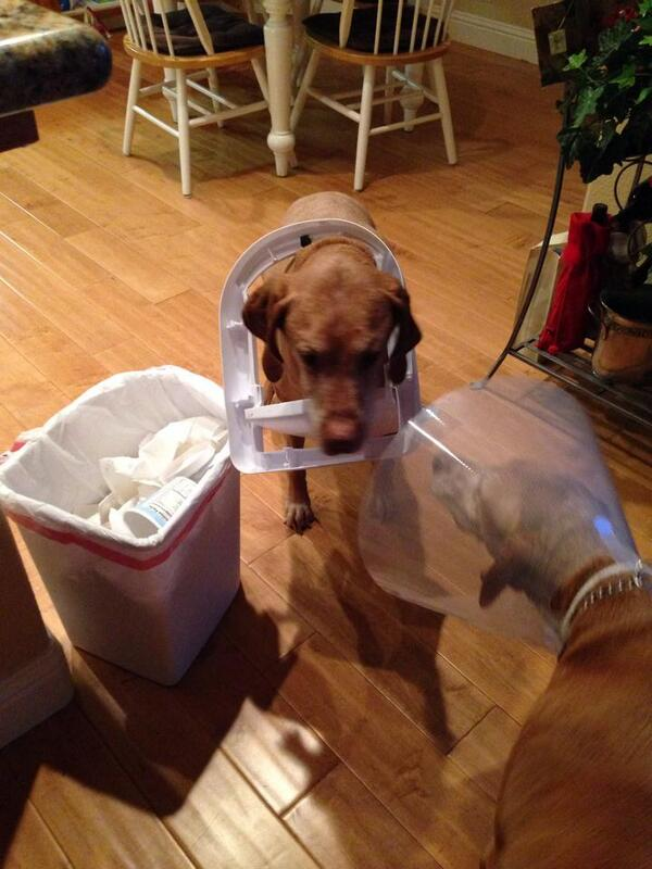 This picture is categoric proof that dogs are capable of empathy (or they have a sense of humour / are stupid). http://t.co/7Y5bYDkHIY