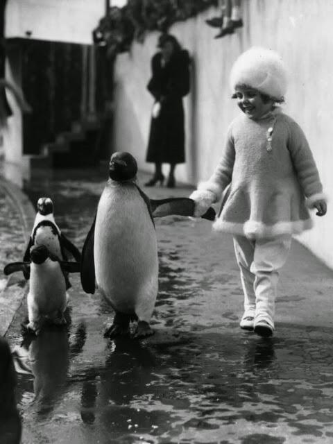 London Zoo, 1937: A little girl holds a penguin's flipper. http://t.co/HlH8qwyOST via @vintag_es http://t.co/hka5YvmurY