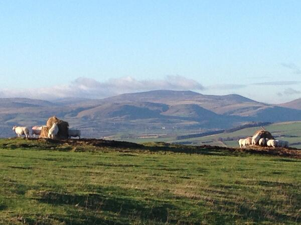 Do these sheep enjoy the best view as they eat lunch? #Northumberland http://t.co/VX3OmKDDF2