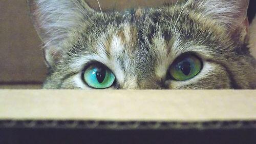 Green eyes http://t.co/jIeNhnedBz