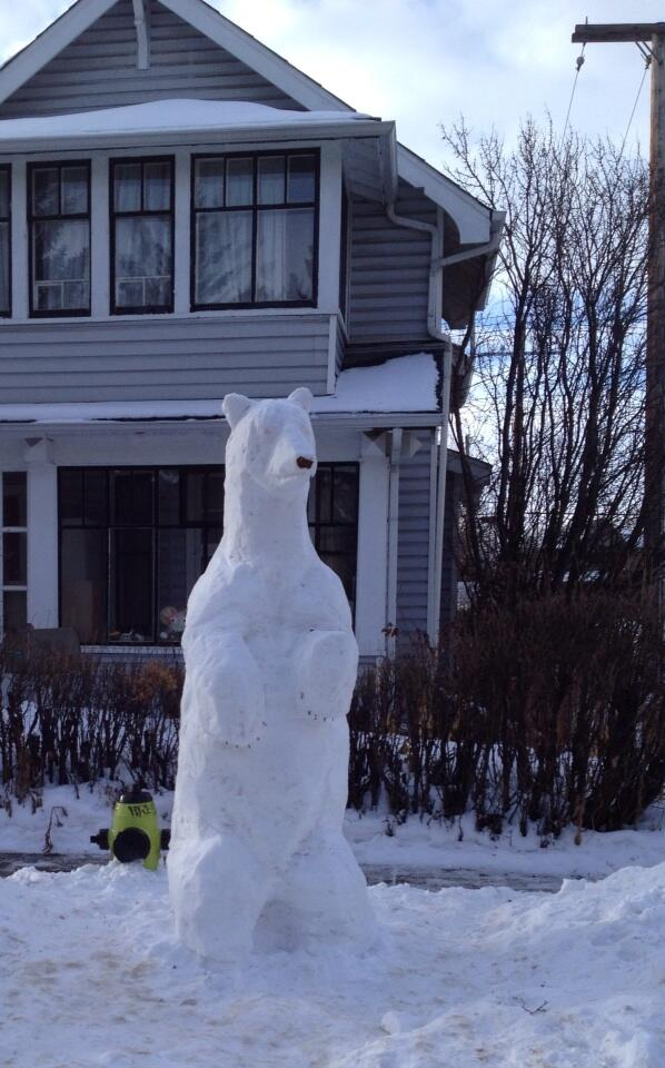 Craig Larkins (@Craig_Larkins): this is awesome! RT @CBCBryan Time for a diversion? Polar bear spotted in NW #yyc! This guy is about 5' tall http://t.co/UJmNcCriSd