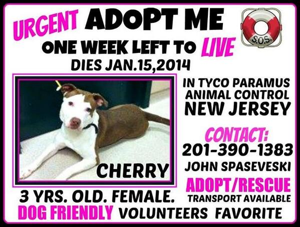 Urgent!!! Wonderful, friendly dog dies in NJ 1/15!! Please share for adopter or rescue. Save her!!
