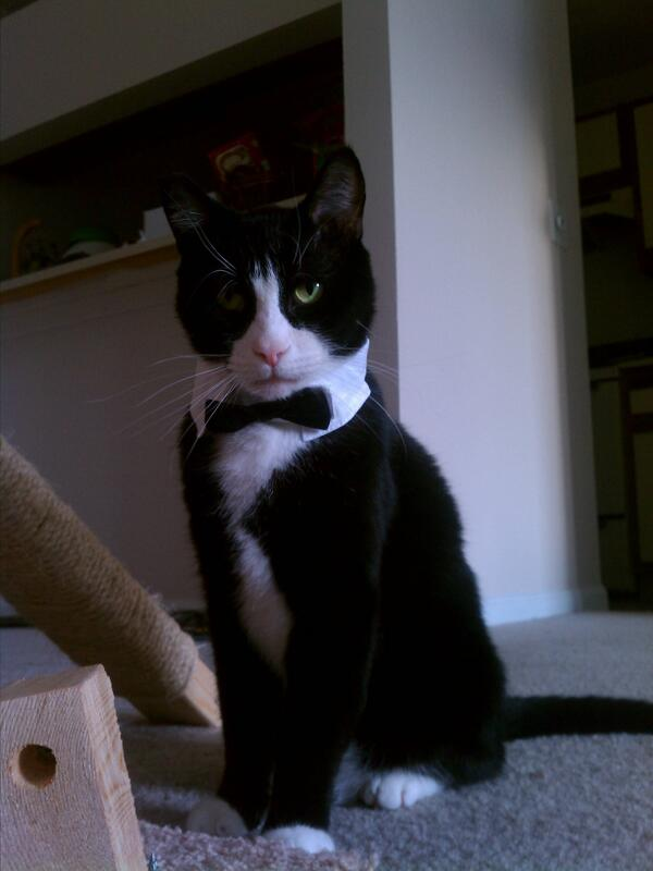 Does this cat look like a James Bond villain or what? Via http://t.co/dXfCKtzPtG http://t.co/7a1VCKDqD3