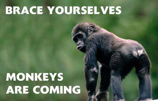 Brace Yourselves. Monkeys are Coming! :) @tempo_english #Animal http://t.co/gawXshZp2i