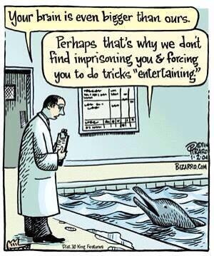 Say NO to seaworlds, seaquarium, dolphinarium , animal circus . http://t.co/LdX7Jx0lsn