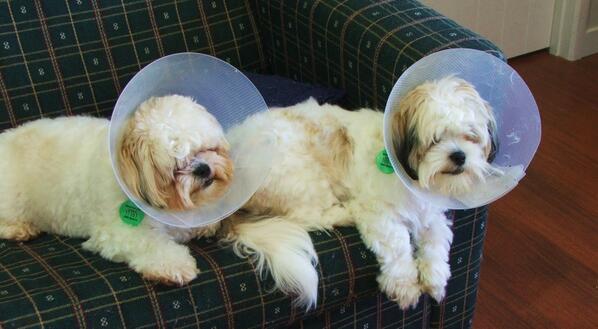 If Daft Punk were dogs.... http://t.co/RA2VjjnAwh