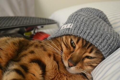 Beanie cat. http://t.co/xwwCVLoAHL