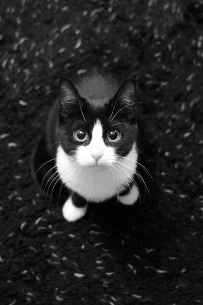 Pet me, pweez. http://t.co/nxvBYHKQwe