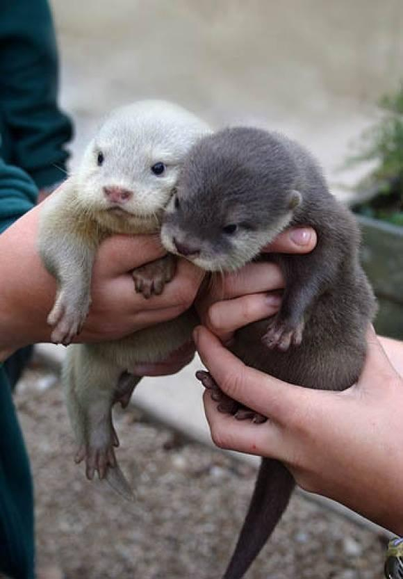 Baby otters http://t.co/7SOYNAgwX2