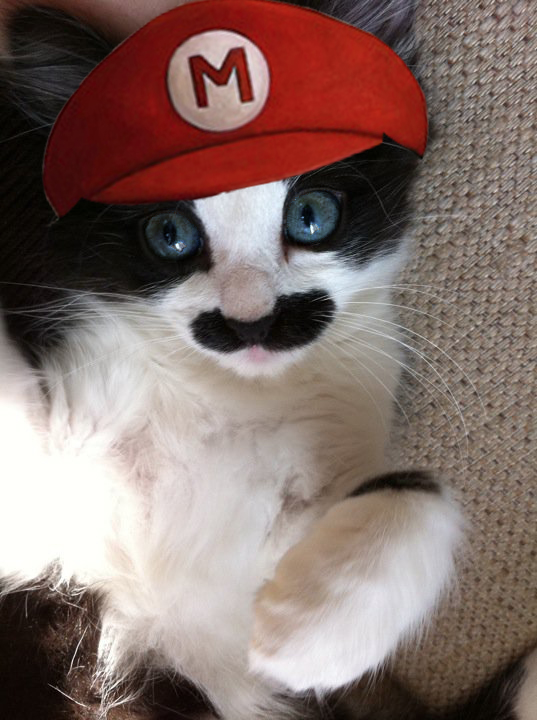 Its a me, Meowrio http://t.co/WJS5LlRlPz