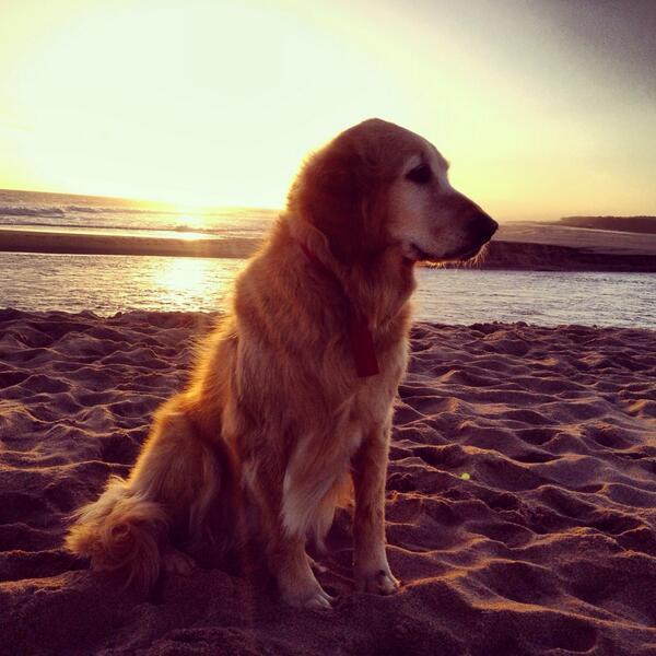 Se me escapo Pampita, mi perra x la zona de Manantiales, Punta del Este. Por favor ayudenme! http://t.co/dxXdOolH1Q