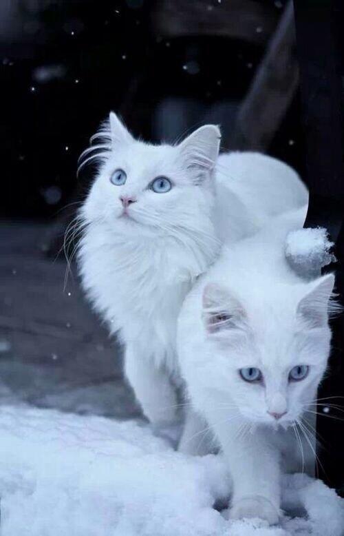 Twinsies. http://t.co/OnA0xmwl0r
