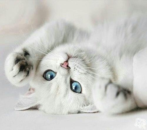 Pet me! http://t.co/2l8W3Etcyy