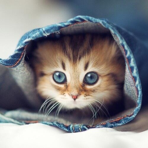 Peek-a-boo! http://t.co/zrguzHaGEF