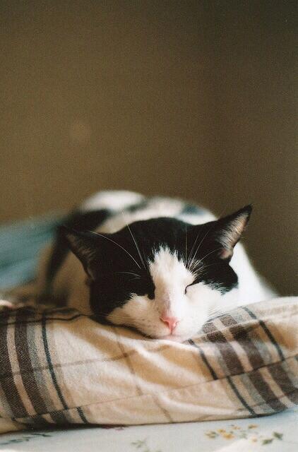 Sleepy time! http://t.co/kMEvu5nRki