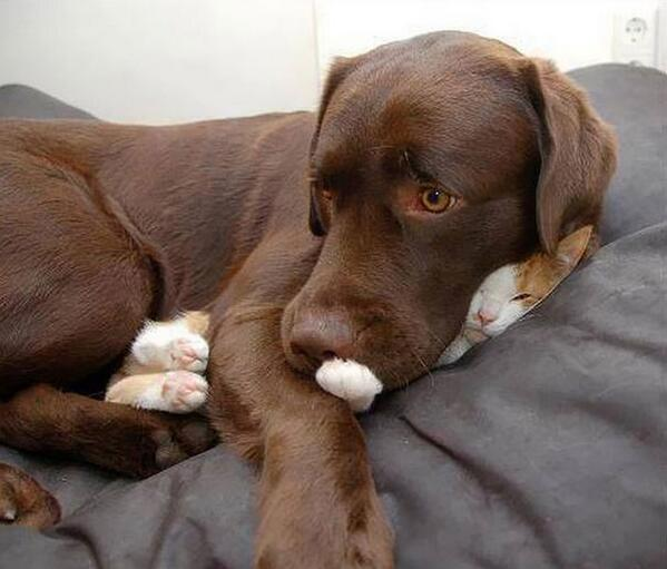 Å dele seng betyr ikke nødvendigvis lik opplevelse av soveplassen http://t.co/pRIQR0rymc