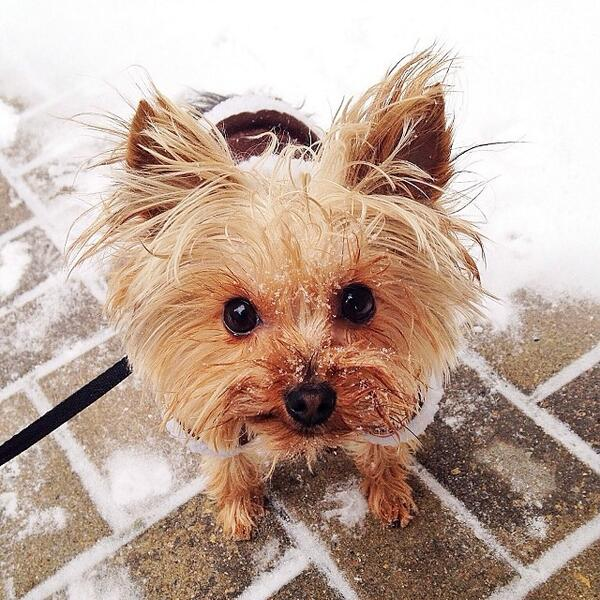 """""""This is Penny - all 4 little pounds of her!"""" -Cuteporter Jenny C. http://t.co/BamkPU8kiC"""