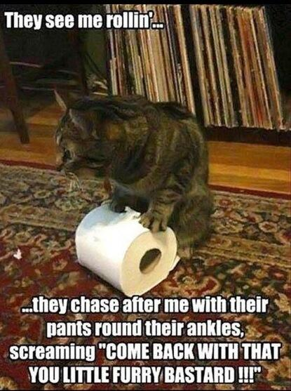 Who has a cat like this? http://t.co/dTcyzbeykA