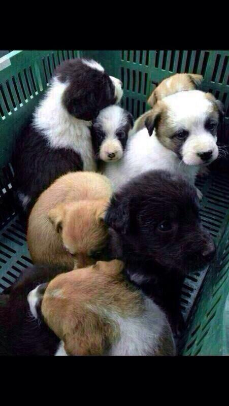 Nos hemos encontrado a estos perritos. Si alguien quiere alguno que me avise.Son tan monos!!! http://t.co/Vsa7hhQEuV
