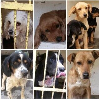 Perritos en el antirrábico Magdalena Contreras Tel. 56672484 hasta 19 d enero para salvarlos @en_ladelvalle http://t.co/8v1YQacY8C