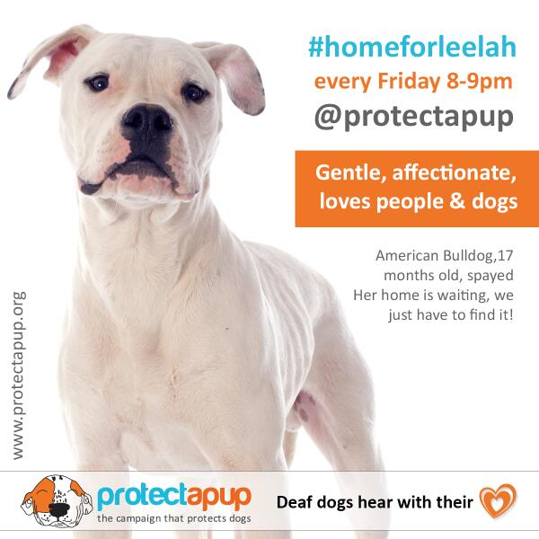 Please tweet #homeforleelah this hour, she's had a rough time& really needs some love now. Copy&paste photos :) http://t.co/a7AxGFwRHL