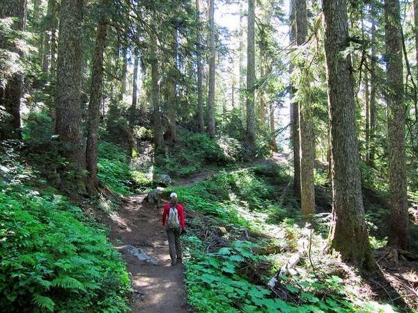 Explore North Cascades National Park, Washington' on @Epiclist. https://t.co/HZhSc1CKQA http://t.co/1p6QS3Aeim